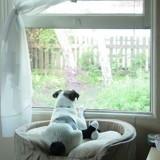 Comment apprendre à mon chien à rester seul ?