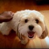 5 choses que vous ne saviez pas sur le chien