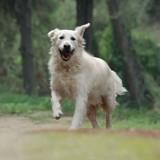Eduquer son chien : pourquoi miser sur le renforcement positif ?