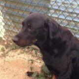 Ce chien condamné cherche une famille pour ne pas mourir dans un refuge