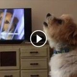 Ce chien pleure dès qu'il voit une pub sur l'abandon (Vidéo du jour)
