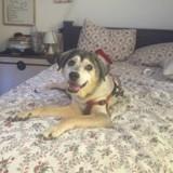 Pour fêter les 19 ans de son chien, elle lui fait un cadeau qui fait exploser de rire tout Internet
