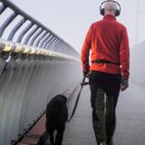 Les chiens en augmentation dans la ville de Stockholm : un remède contre la solitude