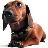 Le top 3 des colliers anti-stress pour chien