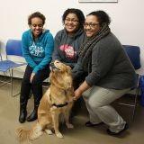 Comment lutter contre le stress de son chien ?