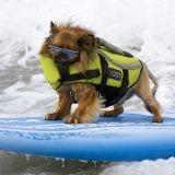 Les meilleurs chiens surfeurs s'affrontent en Californie (Photos)