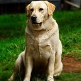 Mon chien est trop gros, comment le faire maigrir ?