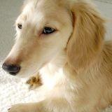 Un chien trouvé vivant dans les décombres d'un appartement… 1 mois plus tard