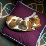 Quel est le meilleur coussin pour chien ?