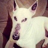 Il tatoue son chien et s'attire les foudres des internautes