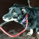 Suite à un drame lors de sa promenade quotidienne, ce chien est le plus triste d'Allemagne