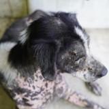 Teigne du chien : causes, symptômes et traitement