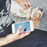 Votre addiction au téléphone portable nuit à la santé psychique de votre chien