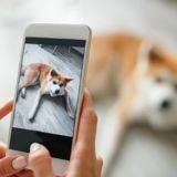 Top 10 des races de chiens les plus populaires sur Instagram en 2020