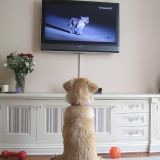 DOGTV, une chaîne rien que pour les chiens bientôt sur nos petits écrans !
