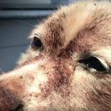 Il néglige son chien qui termine aux urgences, ce que le vétérinaire découvre est à peine croyable