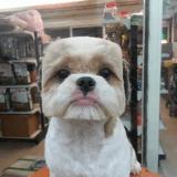 La nouvelle mode de toilettage à Taïwan ? Faire une tête au carré à son chien !