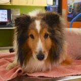 Le vétérinaire va euthanasier le chien : il lui fait une dernière caresse et pousse un cri