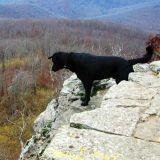 Un chien survit à une chute de 46 mètres