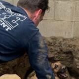 Appelés pour sauver un chien tombé dans un trou, les pompiers découvrent avec surprise qu'il n'est pas seul !