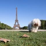 Paris organise sa 1ère Fête des Animaux !