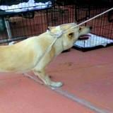 Filmés en train de trainer leur chien dans un refuge, leur réaction glace le sang