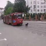 Quand un chien têtu décide de bloquer le tramway ! (Vidéo du jour)