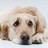 En demande-t-on trop à son chien ?