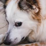 Un homme arrêté car il refusait de faire euthanasier son chien