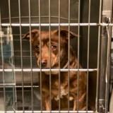 Elle se rend dans un refuge, croise un chien au regard triste et pleure en découvrant son histoire