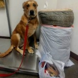 Du jour au lendemain, ils emmènent leur chien et toutes ses affaires au refuge