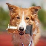 Trophées Animal Challenge : découvrez les produits coups de cœur du jury !