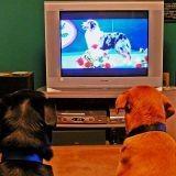 TV : les chiens stars à Noël !