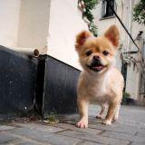 Un seul chien pour les habitants de Chine ?