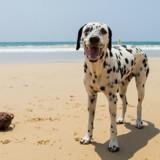 Les 5 avantages à emmener son chien en vacances