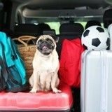 Sélection shopping : les indispensables pour votre chien cet été !