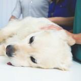 Ils ne peuvent pas payer la facture du vétérinaire, il menace d'euthanasier leur chien