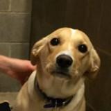 Il emmène son chien chez le vétérinaire et n'en revient pas du message qu'il reçoit quelques heures après
