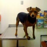 3 conseils pour que votre chien soit calme chez le vétérinaire