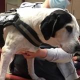 Sa maîtresse meurt lors d'une balade : le chien de 14 ans fait face à un destin tragique