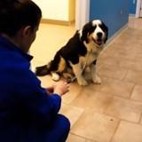Ce chien a une réaction franchement étonnante chez le vétérinaire (Vidéo du jour)