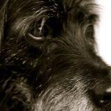 Le chien le plus vieux du monde a 120 ans !
