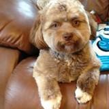 Ce chien ressemble à un humain et sa photo met tout le monde mal à l'aise