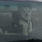 Ils ont enfermé ce chien dans la voiture, sa réaction est incroyable ! (Vidéo du jour)
