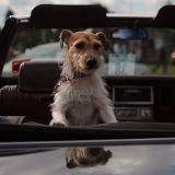 Mon chien a peur de monter dans ma voiture : que faire ?