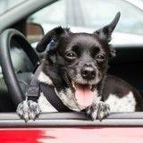 La fourrière enlève sa voiture… avec son chien à l'intérieur !