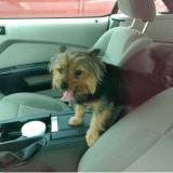 Un homme devant la justice pour avoir sauvé un chien