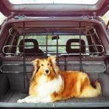 En voiture avec son chien : bien s'équiper