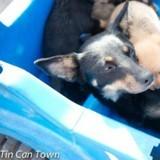 Sans voiture pour emmener sa chienne chez le vétérinaire, elle a une idée que personne n'oubliera