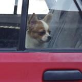 Ils laissent leur chien dans une voiture en plein soleil, la réaction de la police provoque la colère